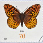 USPS Butterfly Stamp - Everything You Need to Know